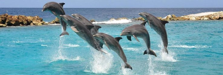 Zwemmen dolfijnen curacao